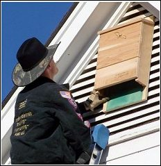 Wildlife Whisperer installing bat box on house