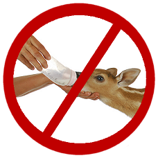 symbol for do not feed