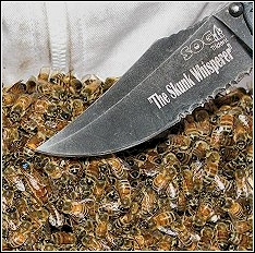 tip of knife pointing to queen bee with special marking