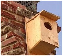 house built for owls to relocate