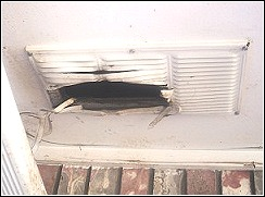 soffit vent ripped open by raccoon