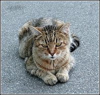 stray or feral cat on commercial property