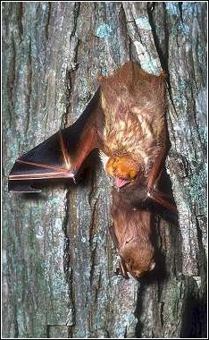 tree bat with baby