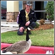 ned bruha watching a goose cause problems in a parking lot