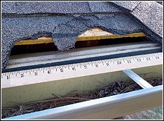 roof damage where raccoons used a gap between the roof and house to enter the attic
