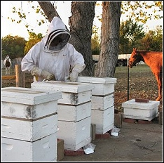 company beekeeper working with bees