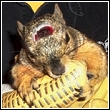 squirrel injured in trap