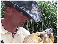 skunk whisperer ned bruha removing opossums the humane way